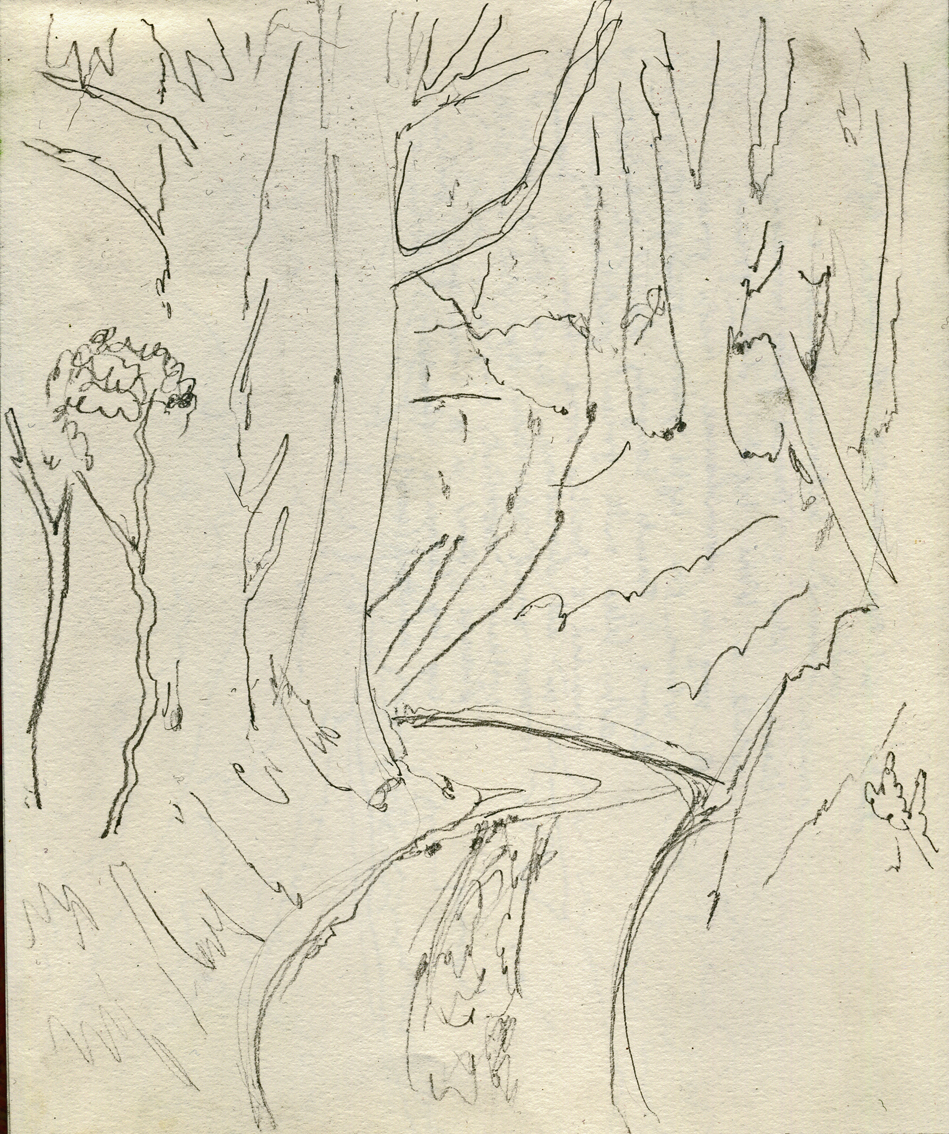 Trees on a bend, near Stroud, pencil on paper